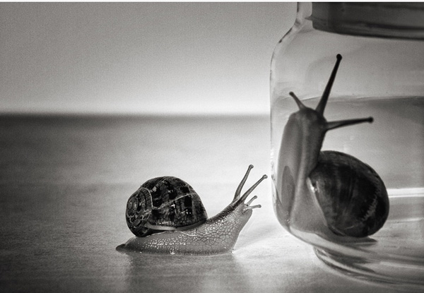 two snails looking at each other